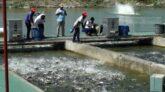 Fish farming is done through scientific method