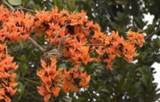 The season is now in Palash